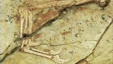 Mamy nowy gatunek dinozaura, bo naukowcy pomylili się 150 lat temu