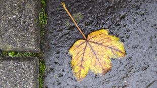 Prognoza pogody na dziś: deszczowo w większości kraju, silniej powieje