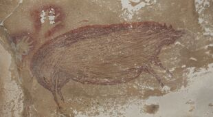 Najstarsze znane malowidła jaskiniowe odkryte w Indonezji