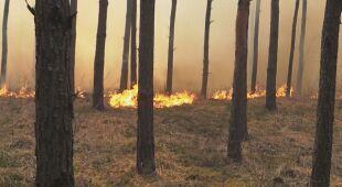 Pożar w lesie pod Warszawą